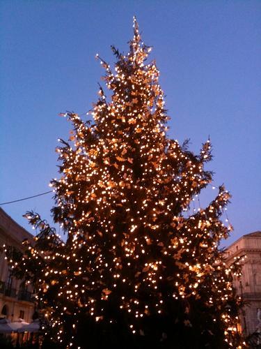 Albero di Natale - Siracusa (2118 clic)