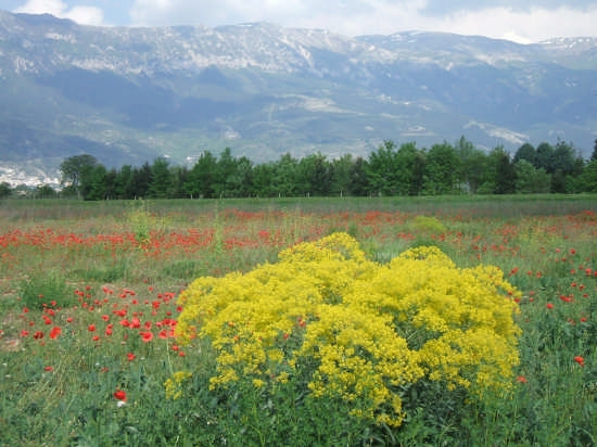 colori di fiori - Paterno (2381 clic)