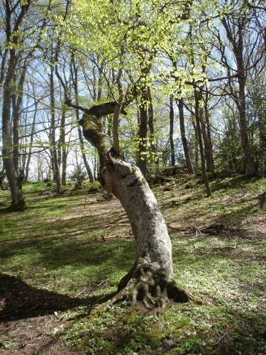 bosco di Sant'Antonio - Pescocostanzo (6025 clic)