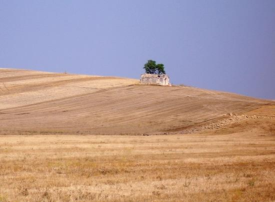 Campagna - Matera (5867 clic)
