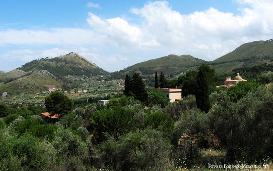 Tra le pinete - San martino delle scale (2220 clic)
