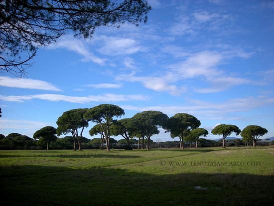 Maremma - Tenuta San Carlo - Uccellina (1844 clic)