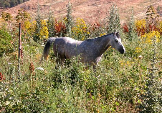 Cavallo e natura - Castronovo di sicilia (1590 clic)