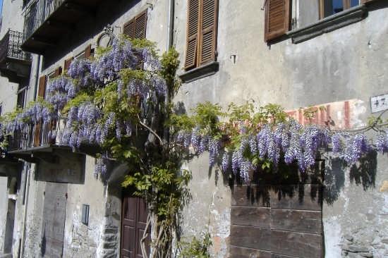 glicine nel borgo - Bard (3311 clic)