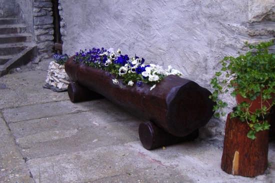 il colore dei fiori - Bard (2812 clic)