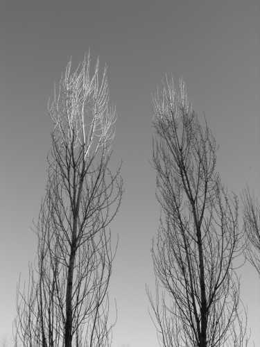 gli ultimi raggi sulle cime degli alberi - PADERNELLO - inserita il 10-Apr-09