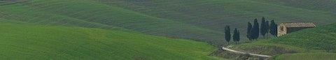 Cipressi - Volterra (2283 clic)