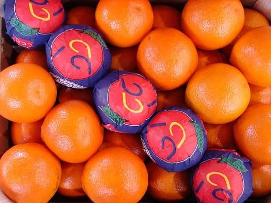 Magnifiche arance di Sicilia - Biancavilla (3927 clic)