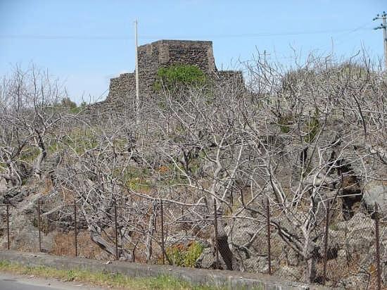 Alberi di pistacchi in abito invernale - Bronte (6052 clic)