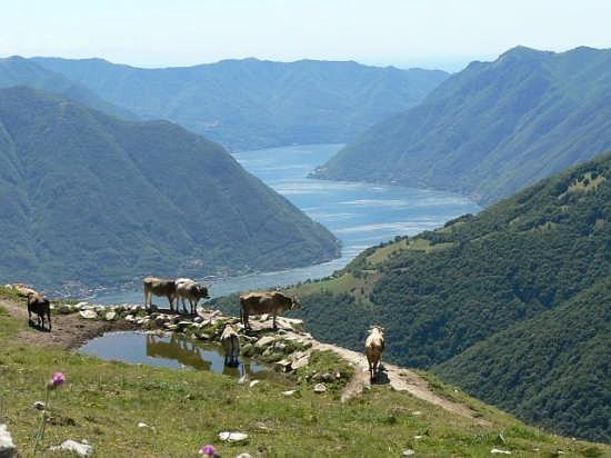 Vista dal Monte di Tremezzo verso Como (3368 clic)