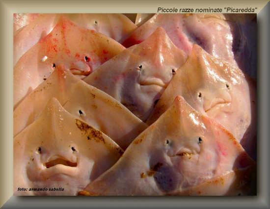 I Picareddi - Licata (3427 clic)