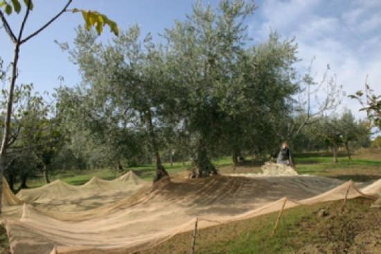 25 Ottobre 2007 - Casalincontrada (1794 clic)