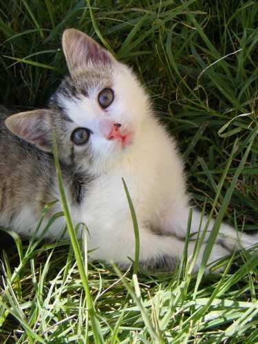 gatto - Cuneo (2239 clic)