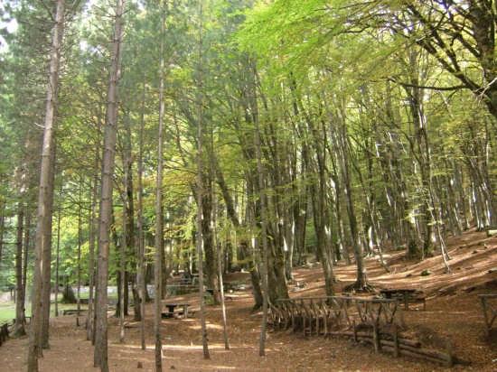 Nel Parco Nazionale d'Aspromonte - Gambarie (6329 clic)