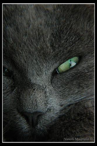 Occhio di Niky - Canzo (2220 clic)