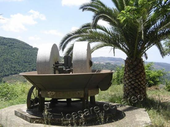 frantoio per la macina delle olive - Curinga (6284 clic)