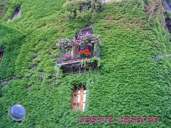 Balcone fiorito - Curinga (4307 clic)