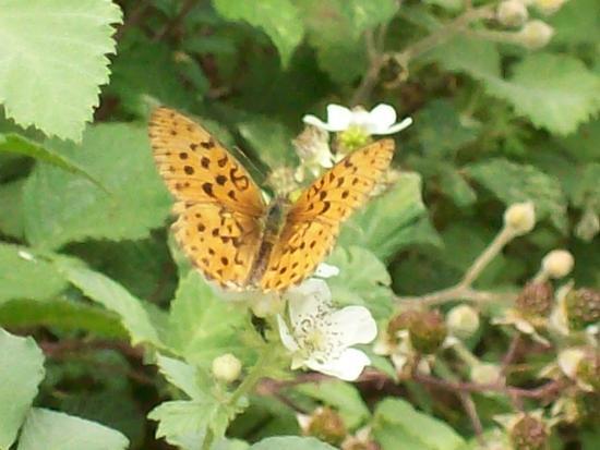 Farfalla - Reitano (1501 clic)