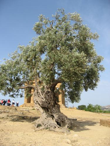 Piante - Agrigento (1446 clic)