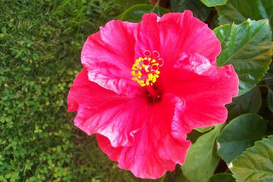 Fiore - Reitano (2166 clic)