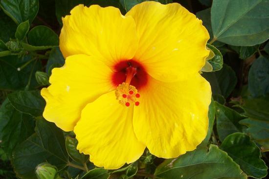 Fiore - REITANO - inserita il 02-Mar-12