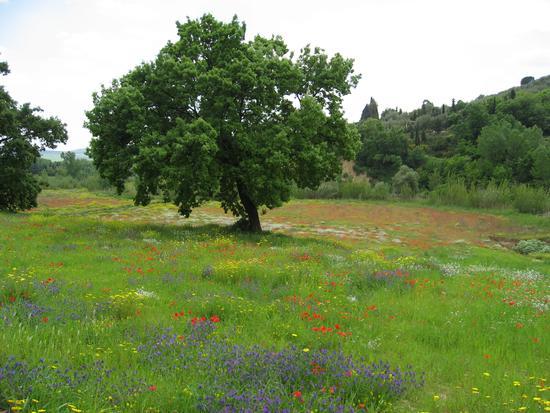 Piante e fiori - Reitano (2191 clic)