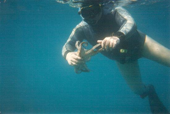 Pesca sub - Reitano (3472 clic)