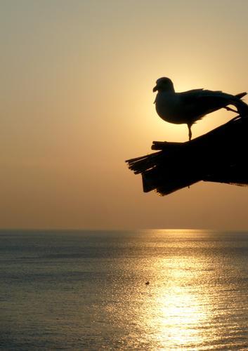 godersi il tramonto - Manarola (2558 clic)