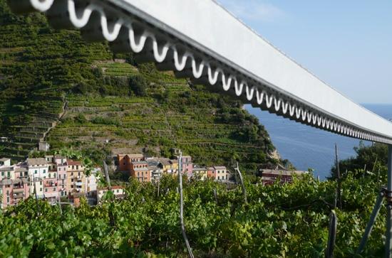 Manarola dal Trenino (3261 clic)