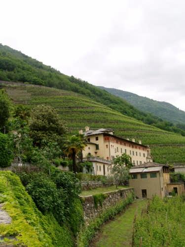 Cantine La Gatta - Bianzone (3525 clic)