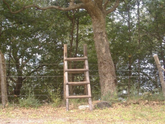 angolo di bosco nel parco dei nebrodi - Caronia (3427 clic)