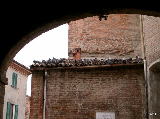 Piccioni - Ravenna (2390 clic)