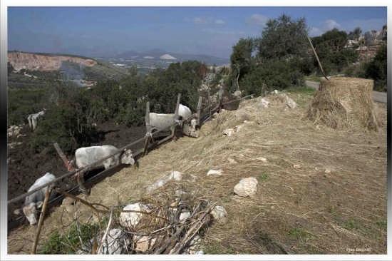 I Vitelloni - Terracina (3027 clic)