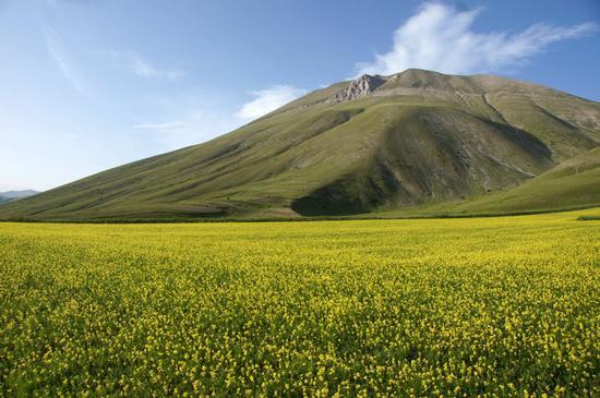 Anticipo di fioritura - Castelluccio (3431 clic)
