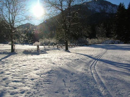 buon sci da fondo a Palò - CONCEI - inserita il 13-Dec-08