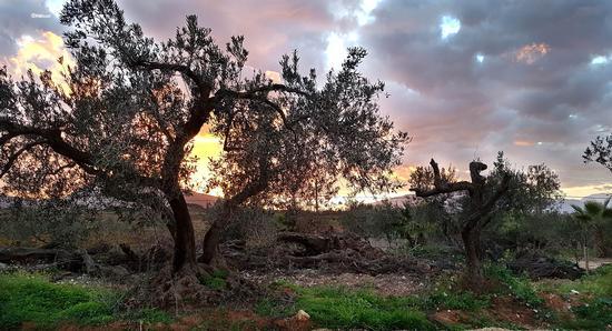 Semplicemente tramonto - Partinico (484 clic)
