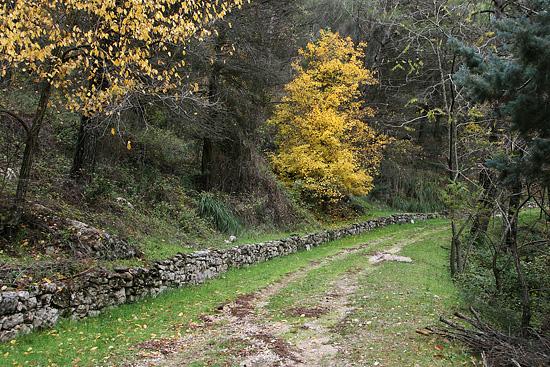 Sentieri di Sicilia - Cammarata (3079 clic)