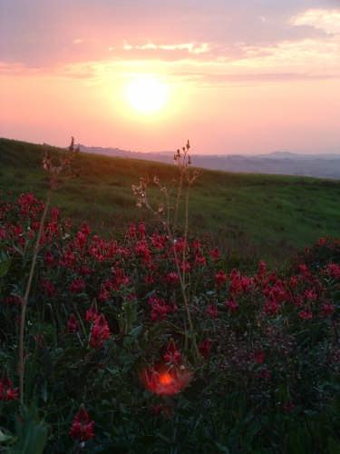 Riflessi al tramonto - Certaldo (2622 clic)