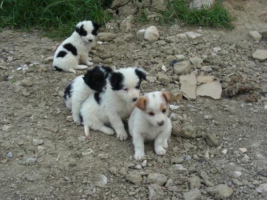 Trenino... di cuccioli - Barrea (2908 clic)