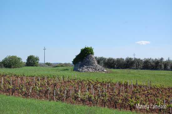 In Valle d'Itria.... - Locorotondo (2263 clic)
