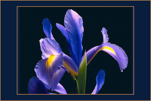 iris - Lerici (2020 clic)