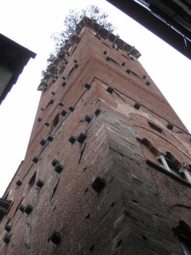 TORRE GUINIGI - Lucca (3496 clic)