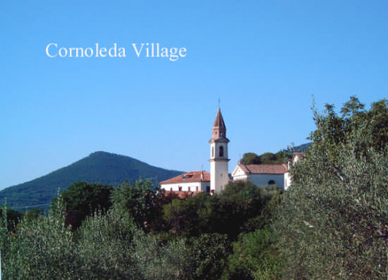 Borgo Cornoleda circondata da Oliveti (2309 clic)