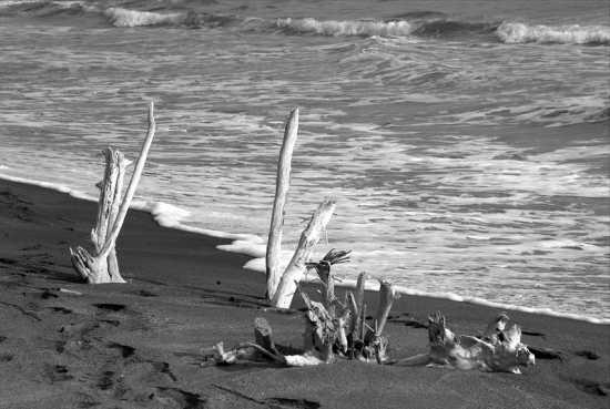 Legni spiaggiati - Civitavecchia (4610 clic)
