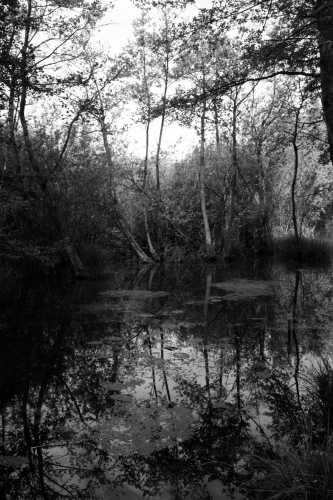 Area umida parco del Sile - Quinto (2166 clic)