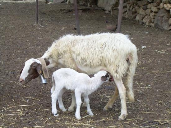 Maternità - Enna (2620 clic)