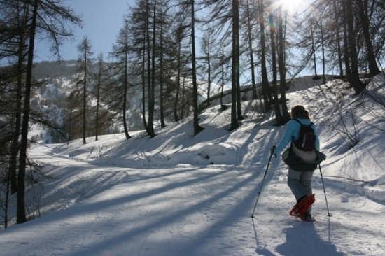 Ciaspolata nel bosco  www.triorando.it  (3079 clic)