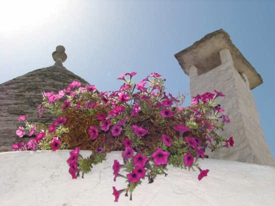 Trulli - Alberobello (2363 clic)