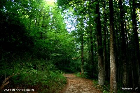 Il Bosco di Mongiana  (3612 clic)