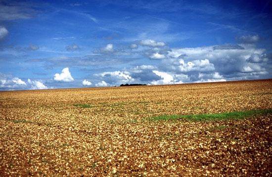 La Partecipanza Agraria - Nonantola (3610 clic)